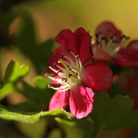 Connie Handscomb - Spotlight On Hawthorn
