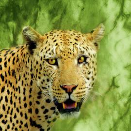 Kathy Franklin - Spotted Leopard
