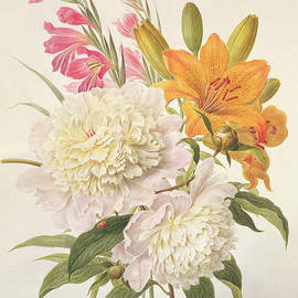 Sprays of Gladioli and Peonies  - Henriette Gertruide Knip