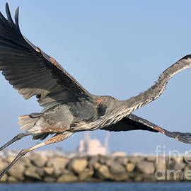 Eddie Yerkish - Spread Your Wings