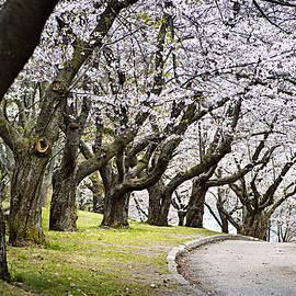 Elena Elisseeva - Spring apple orchard