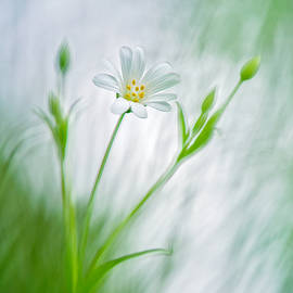 Sarah-fiona  Helme - Spring Ballet