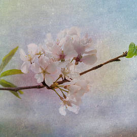 Kim Hojnacki - Spring Beauty