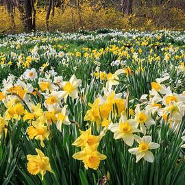 Bill Wakeley - Spring Blooms