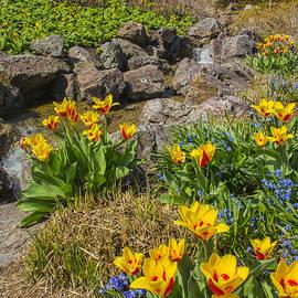 Robert Storost - Spring Blooms