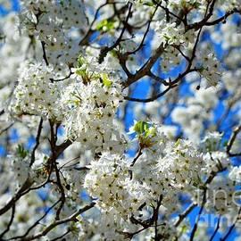 Earle Morrison - Spring Blossom 2