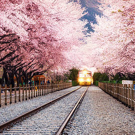 Aaron Choi - Spring Blossom Station