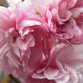 Kim Tran - Spring Blossoms #1