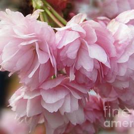 Kim Tran - Spring  Blossoms #7