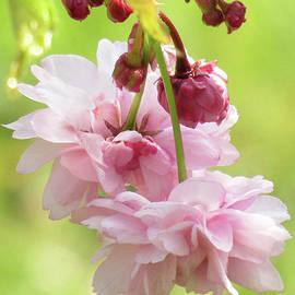 Kim Tran - Spring Blossoms #8