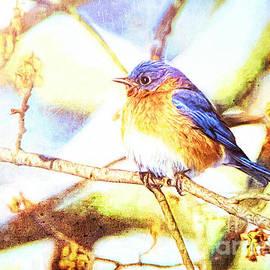 Tina LeCour - Spring Bluebird
