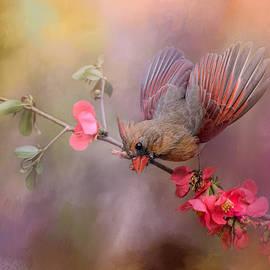 Jai Johnson - Spring Cardinal 2