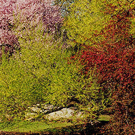 Juergen Roth - Spring Colors