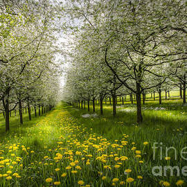 Bruno Santoro - Spring Colors1