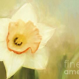 Darren Fisher - Spring Daffodil