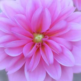 MTBobbins Photography - Spring Dahlia