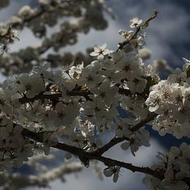 Miguel Winterpacht - Spring Delight