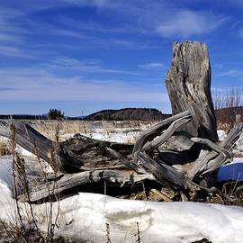 Cathy Mahnke - Spring Driftwood