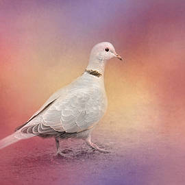 Jai Johnson - Spring Eurasian Collared Dove