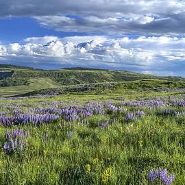 Sam Sherman - Spring Evening Casper Mountain Wyoming