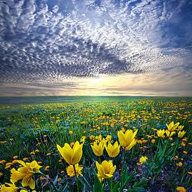 Phil Koch - Spring Fever