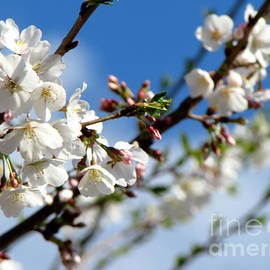 Gardening Perfection - Spring Fling