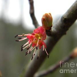 Nathanael Smith - Spring Flower Closeup 1