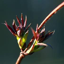 Maksym Tretyak - Spring Flower