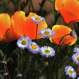 Tom Janca - Spring Flowers in Payson Arizona