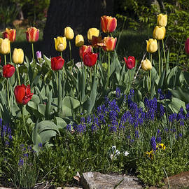 Sally Weigand - Spring Flowers