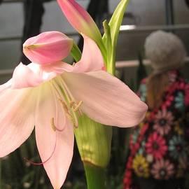 Seija Talolahti - Spring Flowers