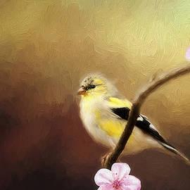 Darren Fisher - Spring Goldfinch