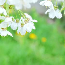 Damijana Cermelj - Spring green