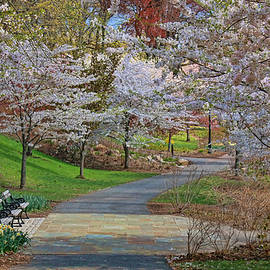 Allen Beatty - Cherry Blossom Trees of Branch Brook Park 14