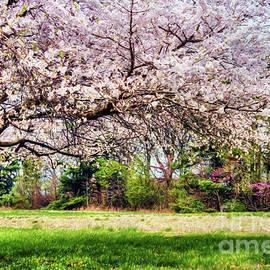 Darren Fisher - Spring has Sprung