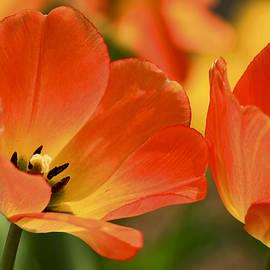 Geraldine Scull   - Spring Has Sprung