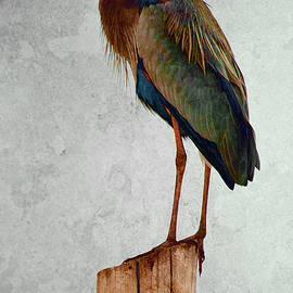 WB Johnston - Spring Heron 4