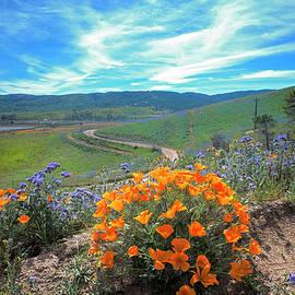 Lynn Bauer - Spring Hilltop View