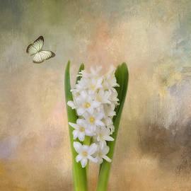 Kim Hojnacki - Spring Hyacinth