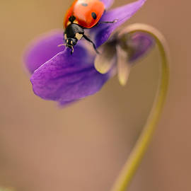 Jaroslaw Blaminsky - Spring impression with ladybug
