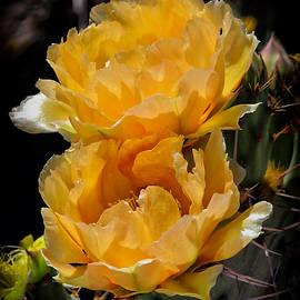 Elaine Malott - Spring In Arizona