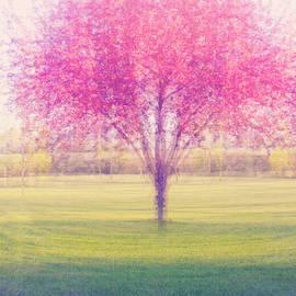 Angela King-Jones - Spring is a blur