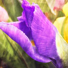 Arlene Carmel - Spring Magic