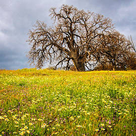 Lynn Bauer - Spring Oak Tree and Wildflowers