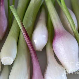 Suzanne Oesterling - Spring Onions