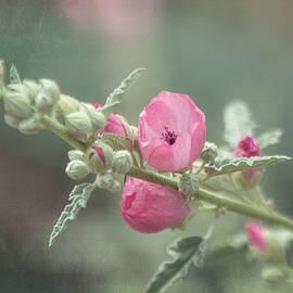 Saija  Lehtonen - Spring Pink