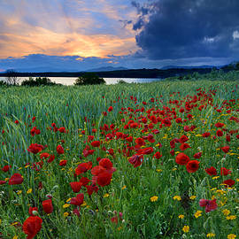 Guido Montanes Castillo - Spring poppies Sunset at the lake