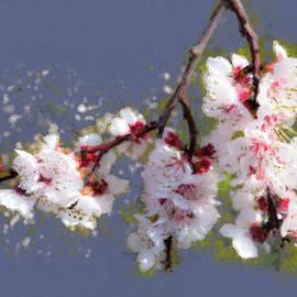 Menega Sabidussi - Spring Promise - Apricot Blossom Branch
