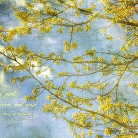 Joan Bertucci - Spring Song