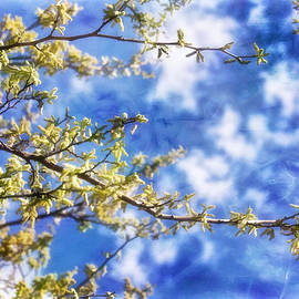 Joan Bertucci - Spring Sunshine